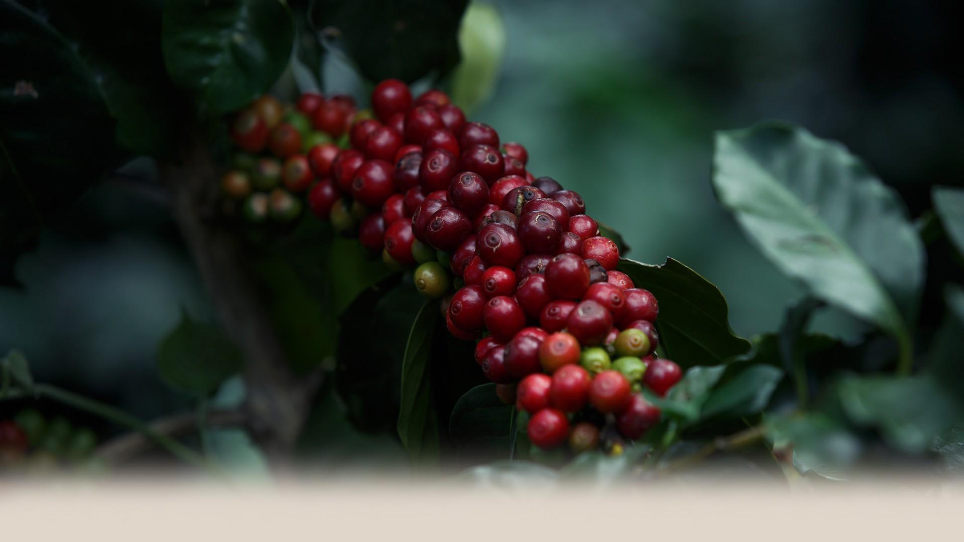 coffee-2540268_1920